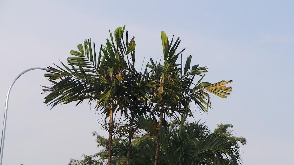Zoom Tree copy