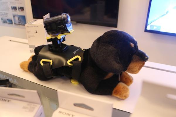 Action Cam dog