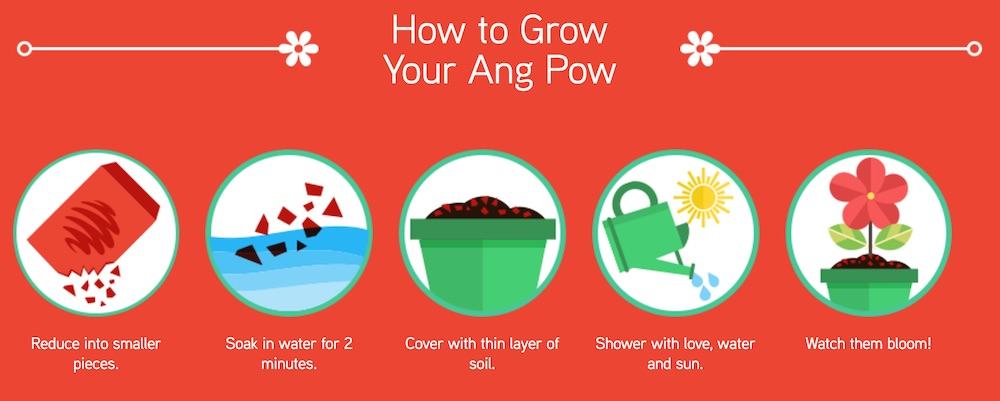 How to grow Maxis Ang Pow