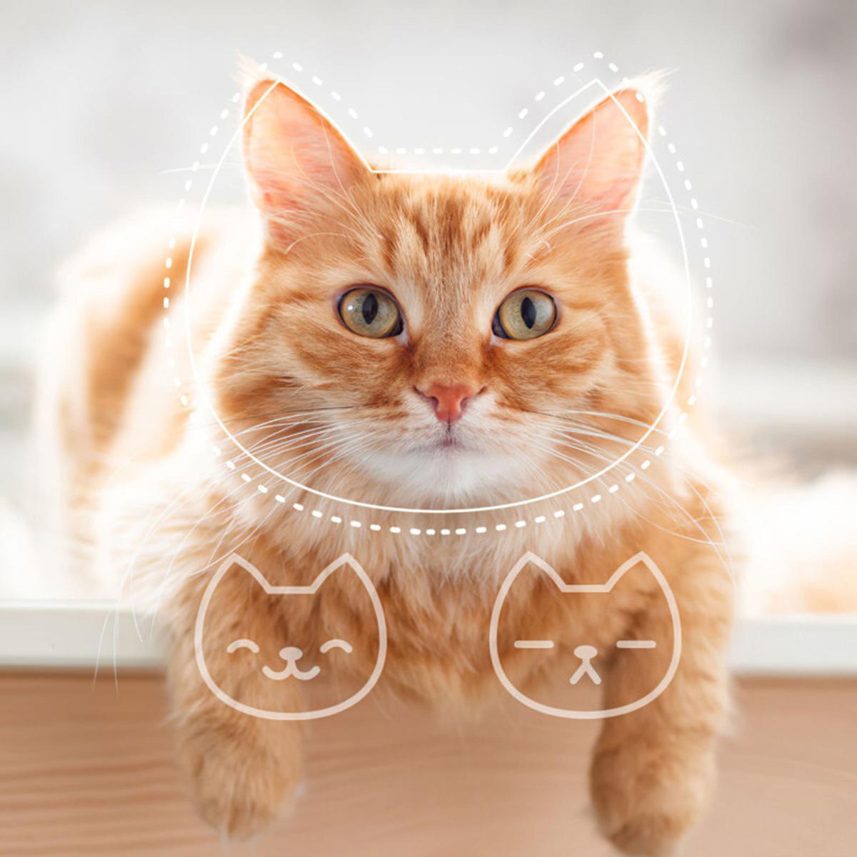 Tably App AI Smartphone Camera Identify Cat's Mood